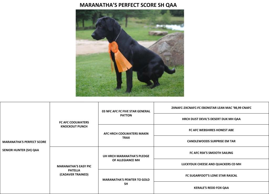Maranatha's Perfect Score Pedigree Jan 2016